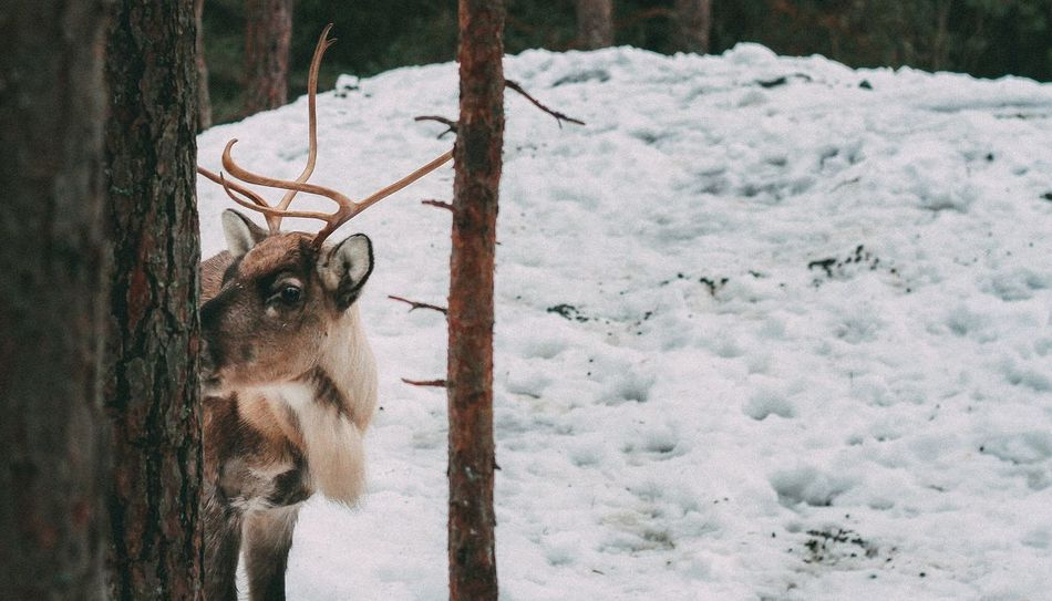 Beautiful stock photos of deer, Animals In The Wild, Cold Temperature, Day, Deer