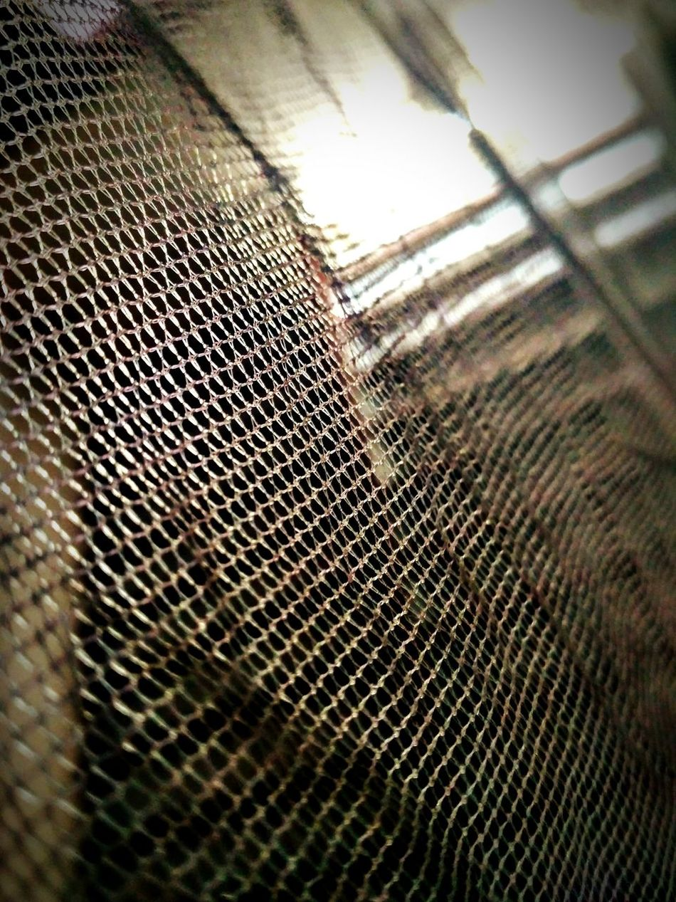 Indoors  Netting Day