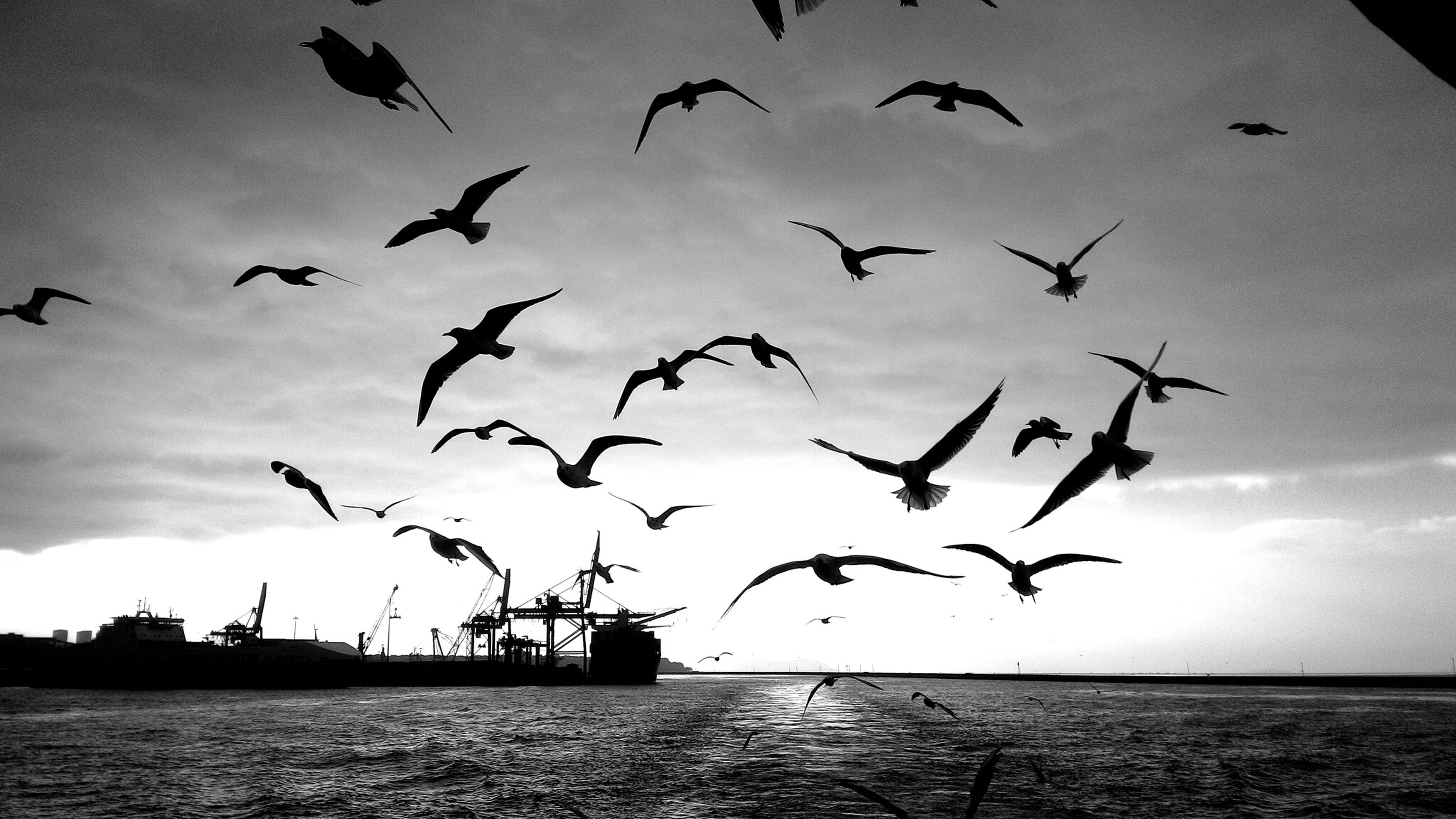 bird, flying, animal themes, animals in the wild, flock of birds, wildlife, water, sea, sky, seagull, spread wings, waterfront, mid-air, horizon over water, nature, silhouette, medium group of animals, cloud - sky, outdoors