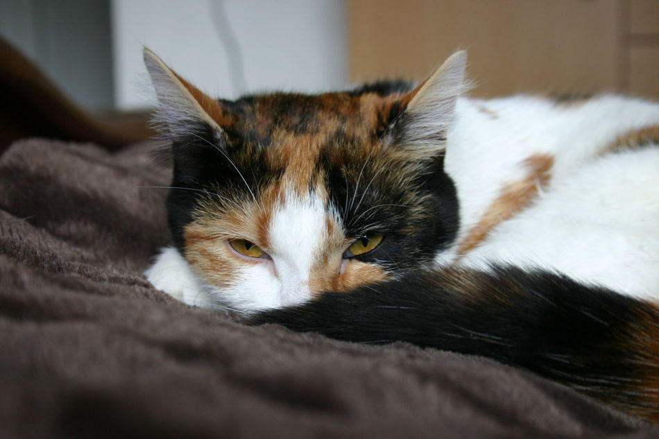 Regard de braise... Animal Animal Body Part Animal Head  Animal Themes Beautiful Cat Chat Close-up Comfortable Cute Cute Pets Domestic Animals Domestic Cat Feline Focus On Foreground Home Kitten Kittenoftheday No People Pets Portrait Profondeur Relaxation Resting Sleeping