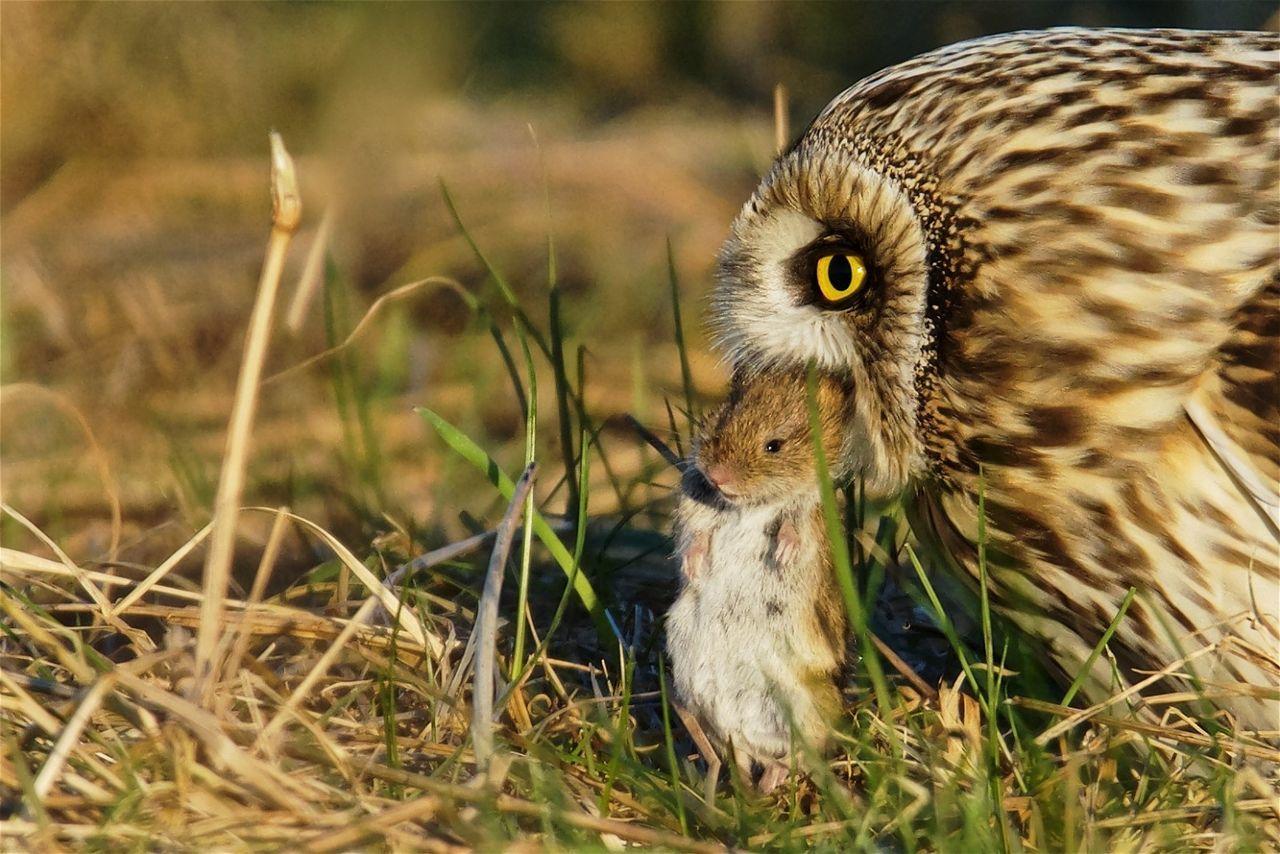 Beautiful stock photos of eule,  Animal Head,  Animal Themes,  Animals In The Wild,  Beak
