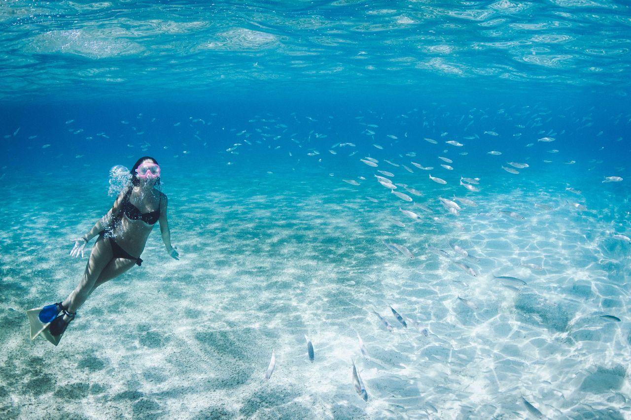 Beautiful stock photos of underwater, 20-24 Years, Adventure, Animal Themes, Animals In The Wild