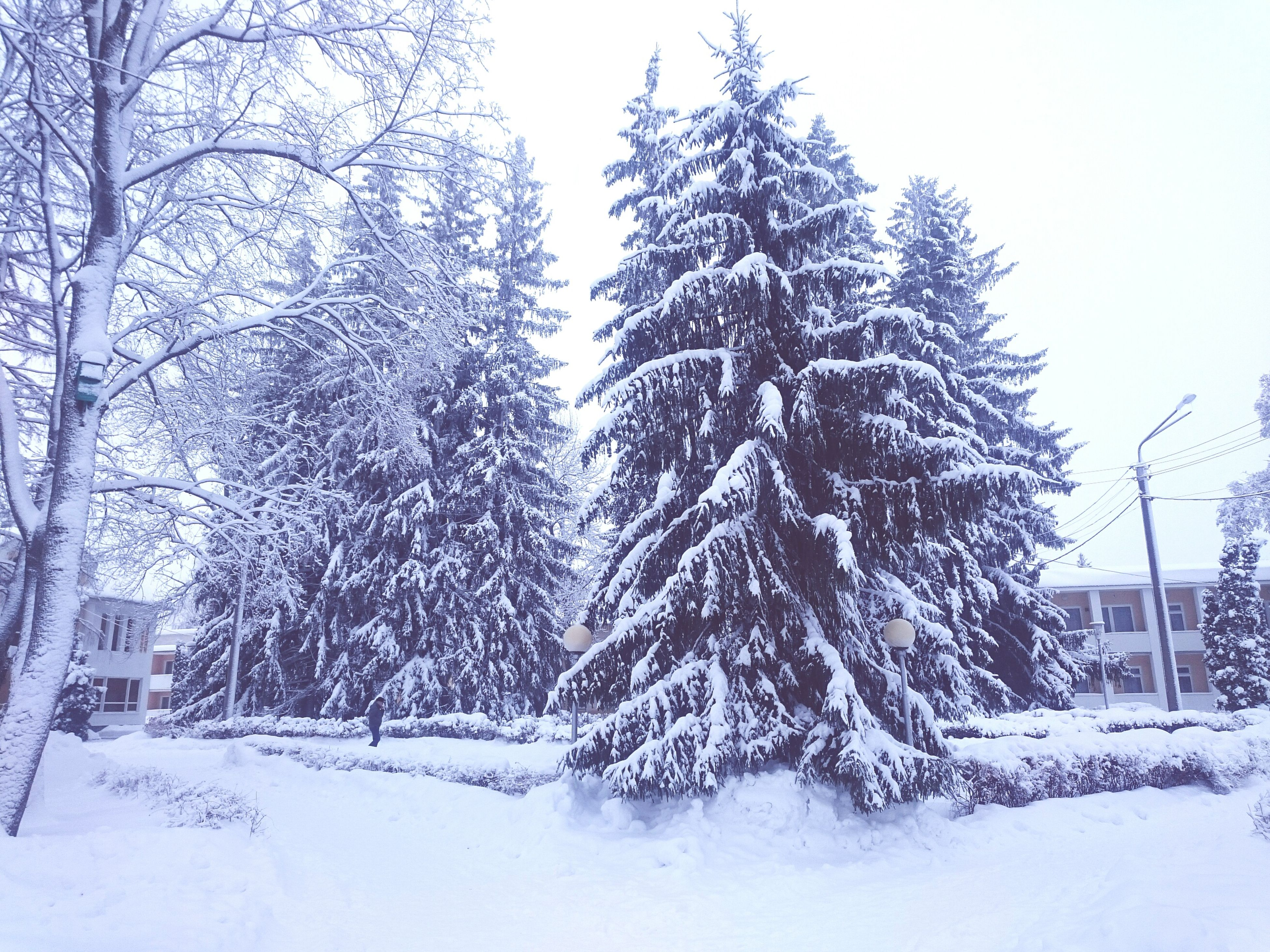 tree, winter, cold temperature, snow, no people, nature, day, outdoors, sky, beauty in nature, snowing