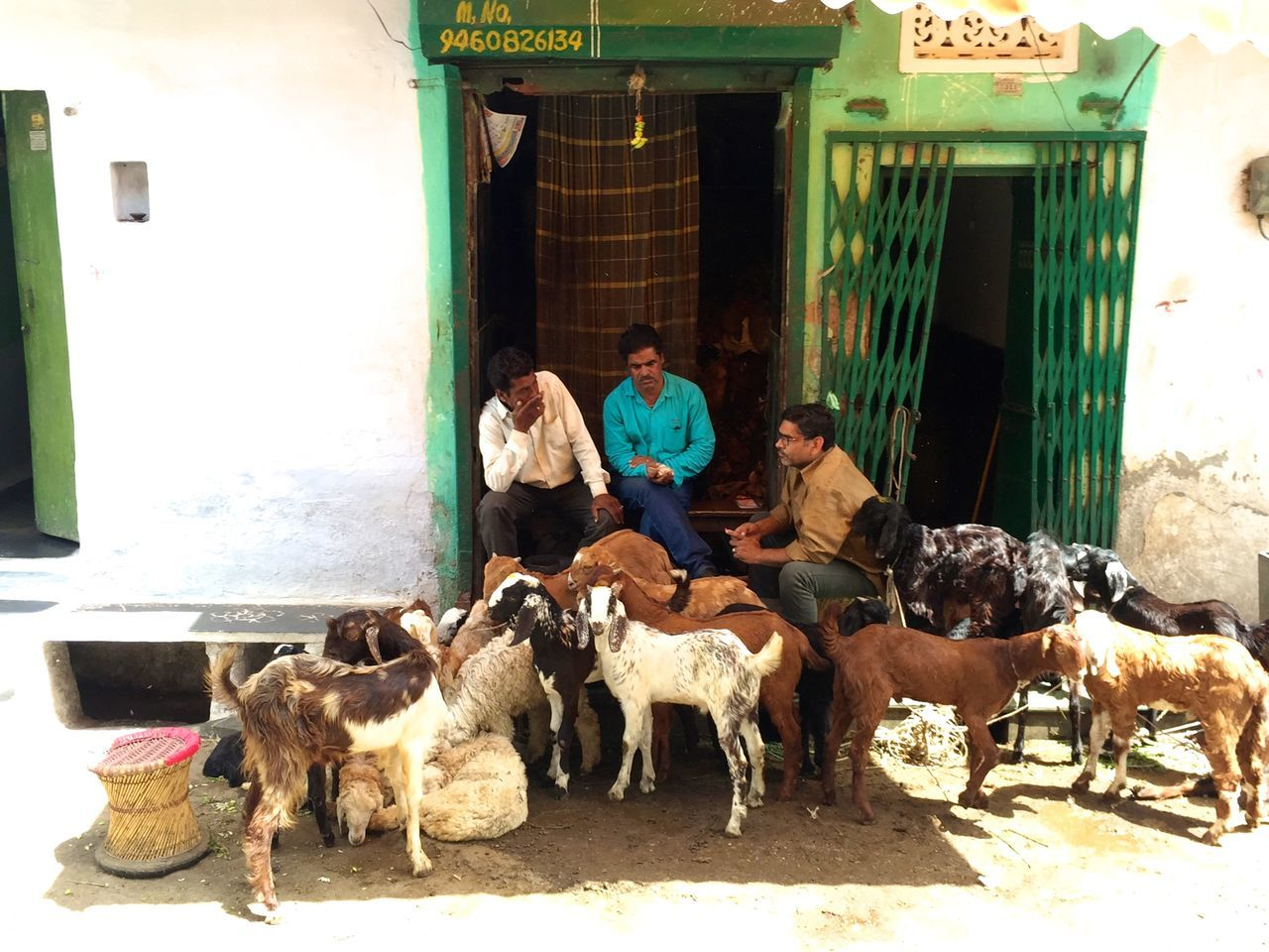 domestic animals, mammal, livestock, real people, built structure, architecture, men, togetherness, day, building exterior, outdoors, pets, dog, sitting, full length, large group of animals, sunlight, sheep, people