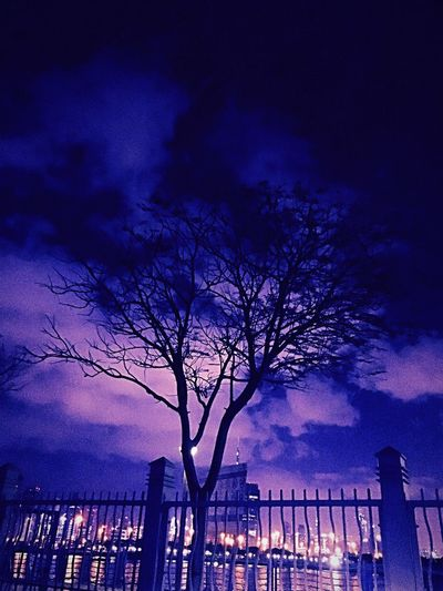 Built Structure Architecture Building Exterior Sky City Outdoors No People Night Bare Tree Illuminated Tree Silhouette Cloud - Sky Nature Skyscraper IPhoneography Night Sky Love Darkness Find Solace