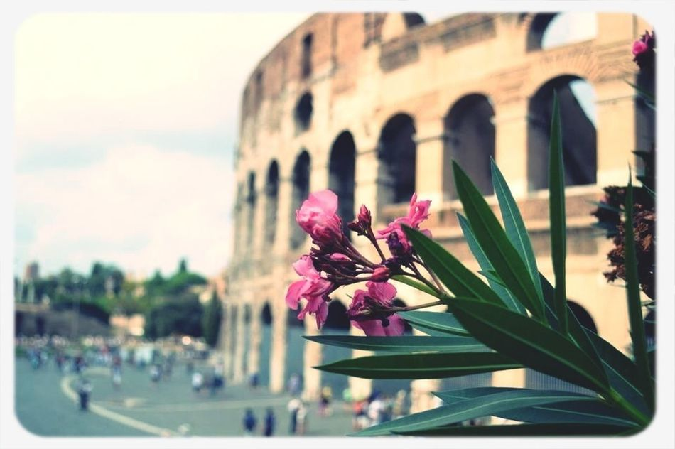 My Lovely Rome