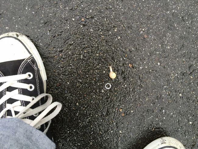 カタツムリ Escargot Mit Meiner Shoe