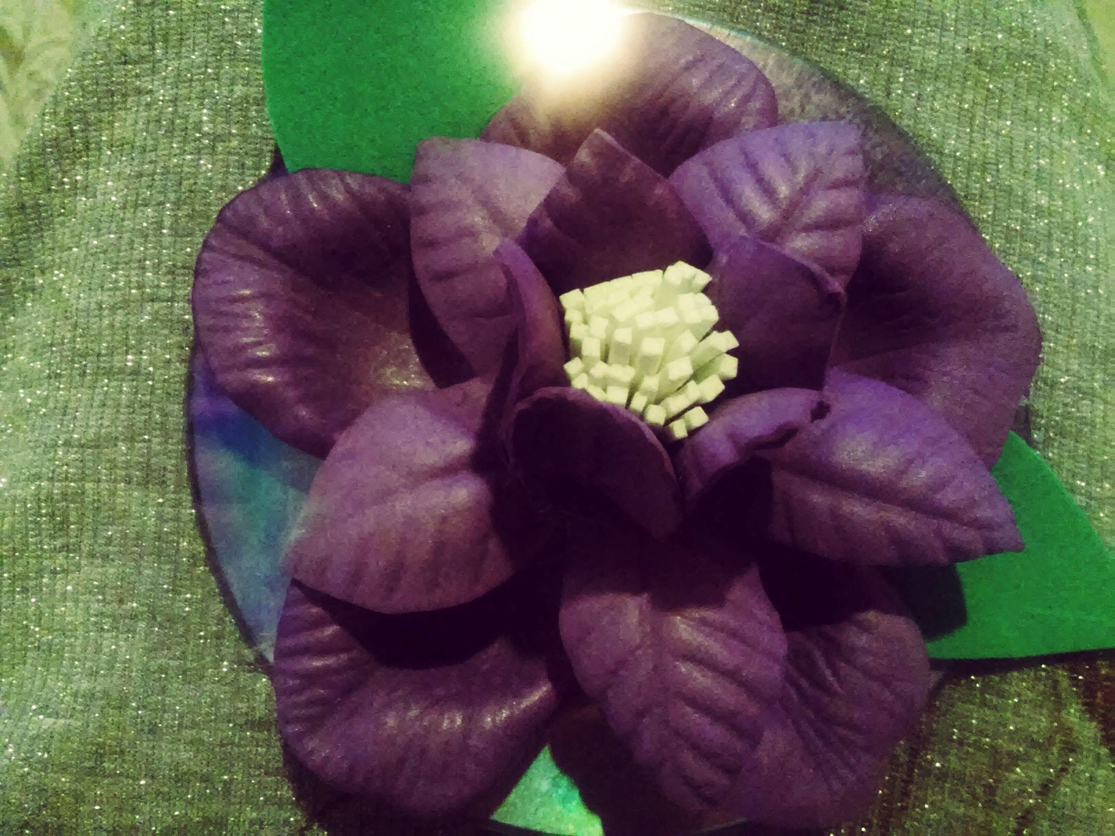 First Eyeem Photo Purple Flower Naturephotography Nature Is Art Naturelover Orquidearoxa Instanature Instaart 🌸👣👣👣