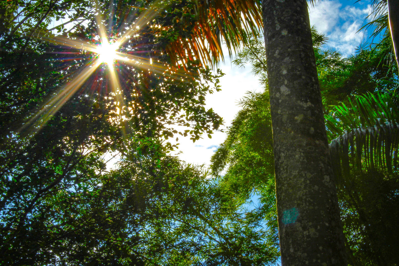 tree, nature, low angle view, growth, outdoors, tree trunk, no people, forest, sunlight, beauty in nature, tranquility, day, sun, scenics, branch, sky