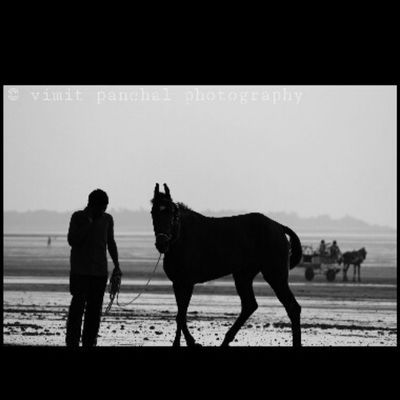 Horses Horse Horsesofinstagram Tagsforlikes Horseshow Horseshoe Horses_of_instagram Horsestagram Instahorses Wild Mane Instagood Grass Field Farm Nature Pony Ponies Ilovemyhorse Babyhorse Beautiful Pretty Photooftheday Gallop Jockey rider riders riding