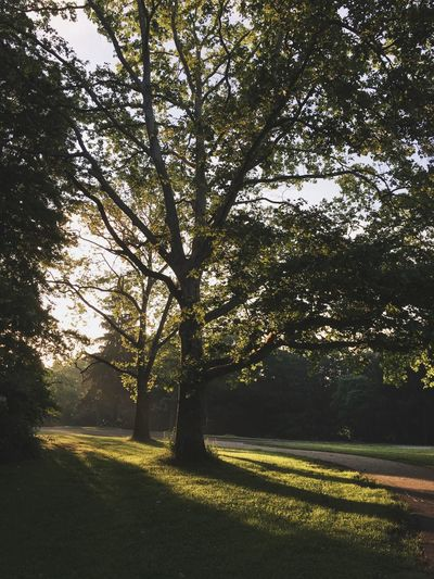Tree Dawn Patrol Sunrise Sun Streaks