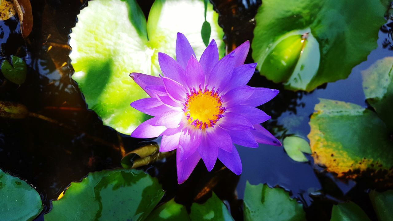 Directly Above Shot Of Water Lily Growing On Lake