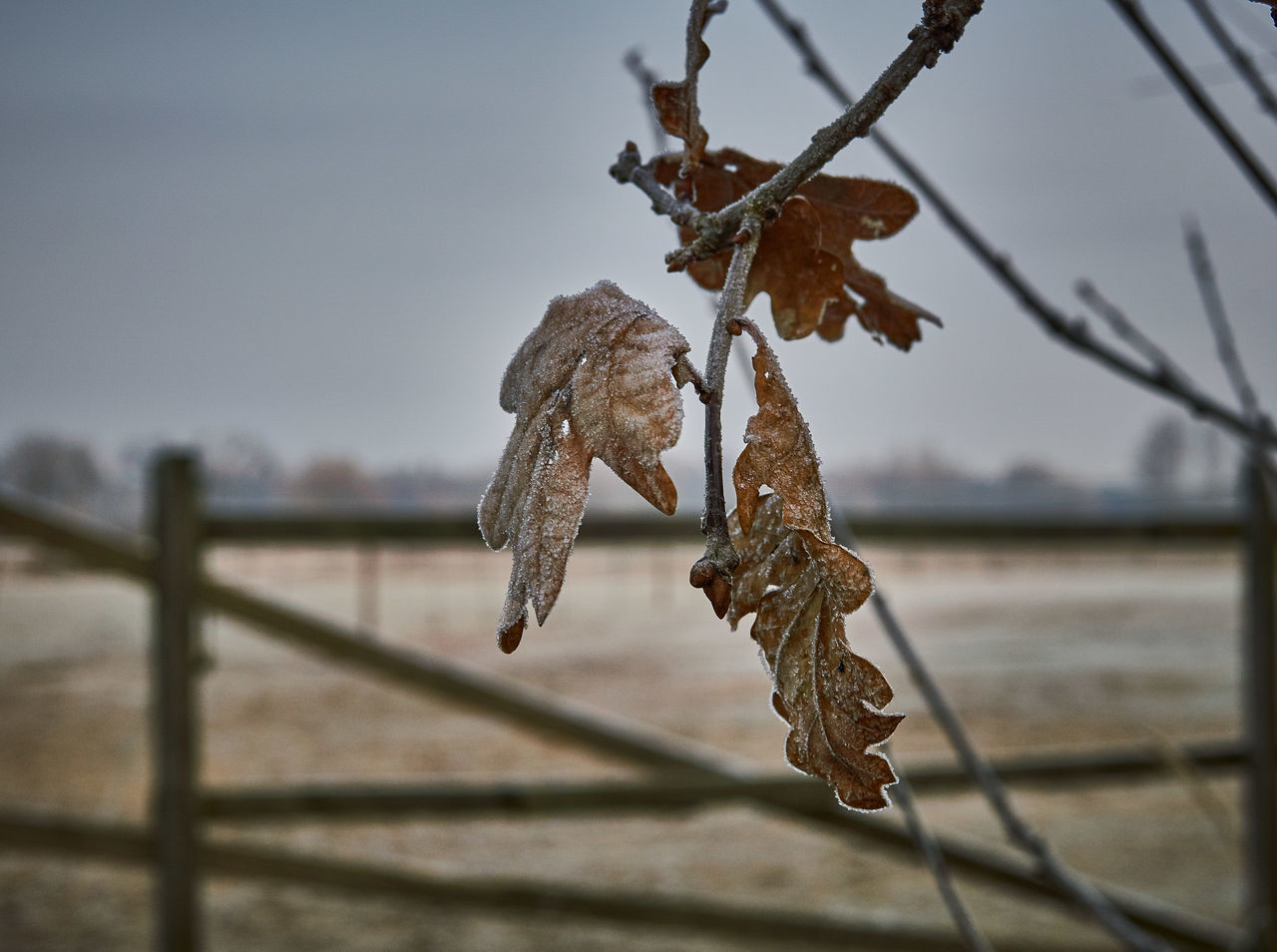 dry, focus on foreground, close-up, nature, hanging, no people, dead plant, outdoors, day, dried plant, beauty in nature, growth, sky