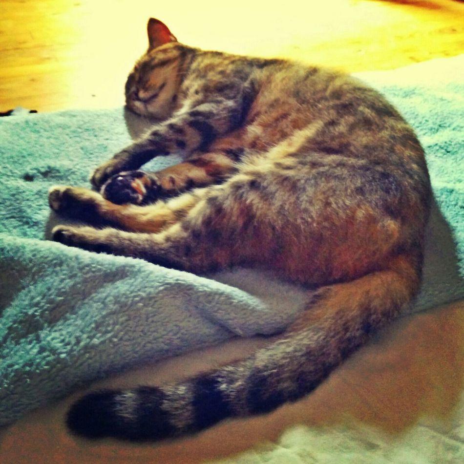 Mostbeautifulcat Most Beautiful Cat In The World Billy Cat♡