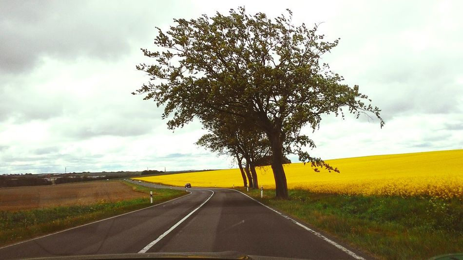 Yellowfield Ontheroad Nature