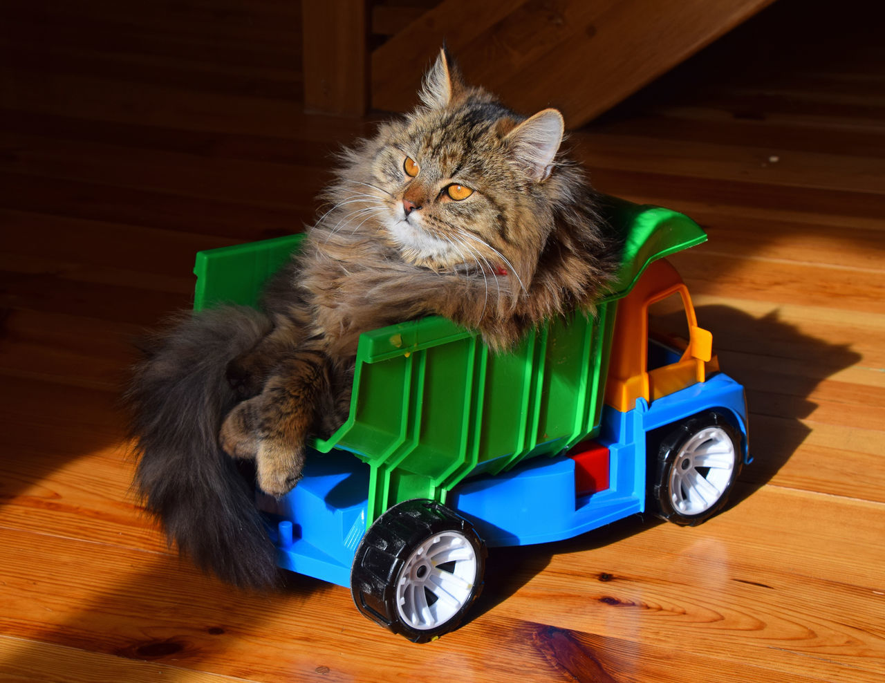 Domestic cat siting in a toy truck Animal Themes Car Cute Cute Cats Cute Pets Domestic Animals Domestic Cat Feline Funny Game Lazy Cat Mammal No People One Animal Passenger Pets Relax Relaxing Toy Truck