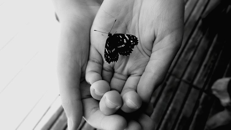 Human Hand Human Body Part One Person Holding Day People Close-up Adults Only Insect Real People Palm Adult Outdoors One Man Only Animal Themes Butterfly
