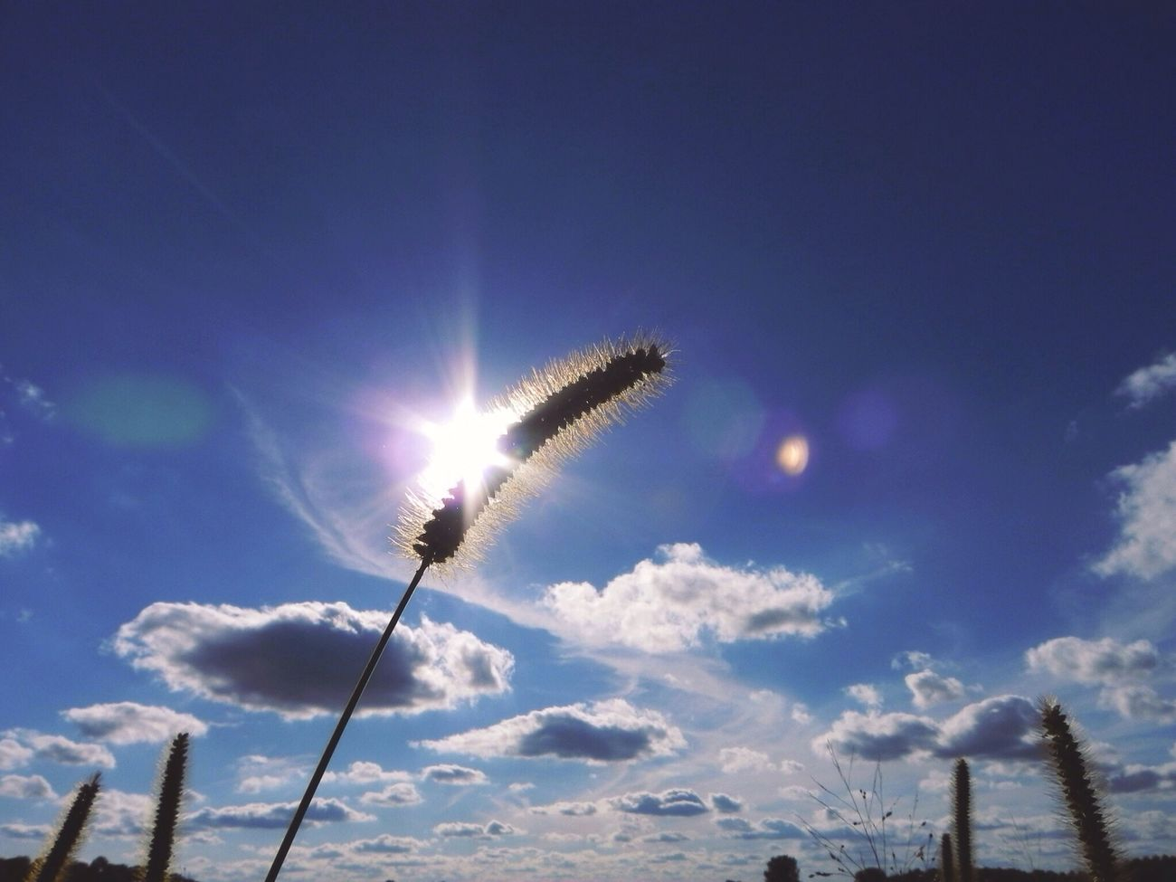 Light Up Your Life Wheat Sun Sun Flare