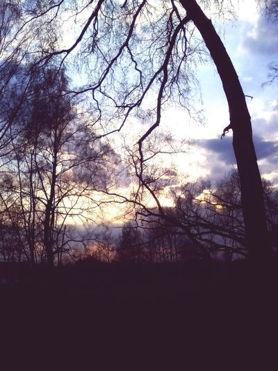 Forest Naturelovers Sunset Trees Evening My Love