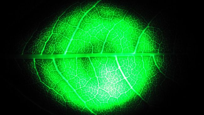 Greenful Light Nature Juicy Timesforexperimets Timetoexperiment Flora Foliage Folium Leaflet Clearance Emerald Malachite Streaks Nephrite Neon Fresh Clorofil Chlorofyl Natural Sceleton Night LED All The Neon Lights Check This Out