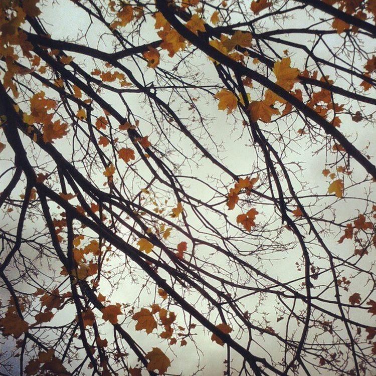 Autumn in Washingtonpark Albany