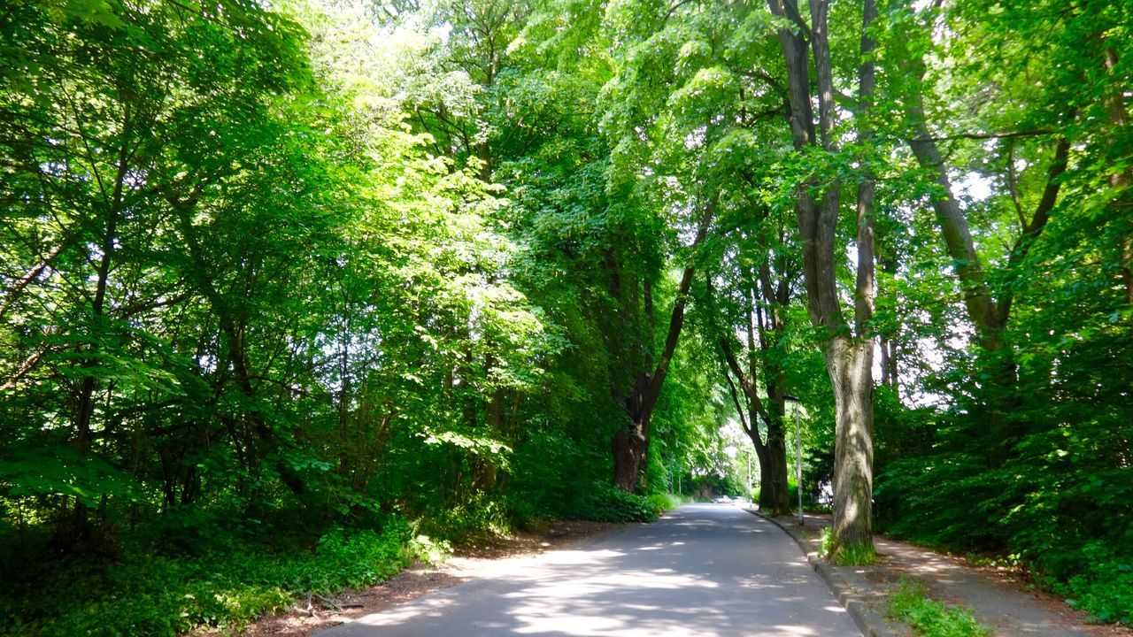 tree, nature, the way forward, tranquil scene, tranquility, beauty in nature, green color, day, growth, forest, outdoors, road, scenics, no people