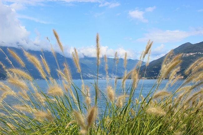 Luino Italy Lago Maggiore Mountains Green Lake View Schilf EyeEm Nature Lover Nature Eye4photography  EyeEm Best Shots Blue Blue Sky View Clouds