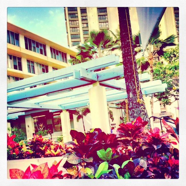 Checking in at Hawaii Prince Hotel WAIKIKI Checking In
