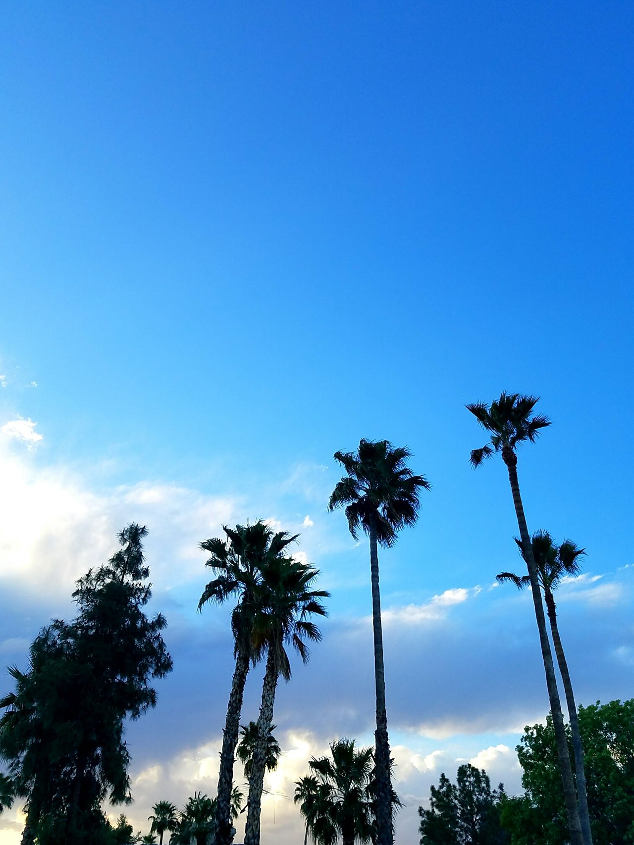 Tree Palm Tree Blue Sky Nature Low Angle View Beauty In Nature Outdoors Silhouette Cloudscape Storm Cloud Cloud - Sky Dramatic Sky Premium Collection EyeEm Vision EyeEm Masterclass EyeEm Best Shots BestEyeemShots EyeEmBestEdits BestofEyeEm