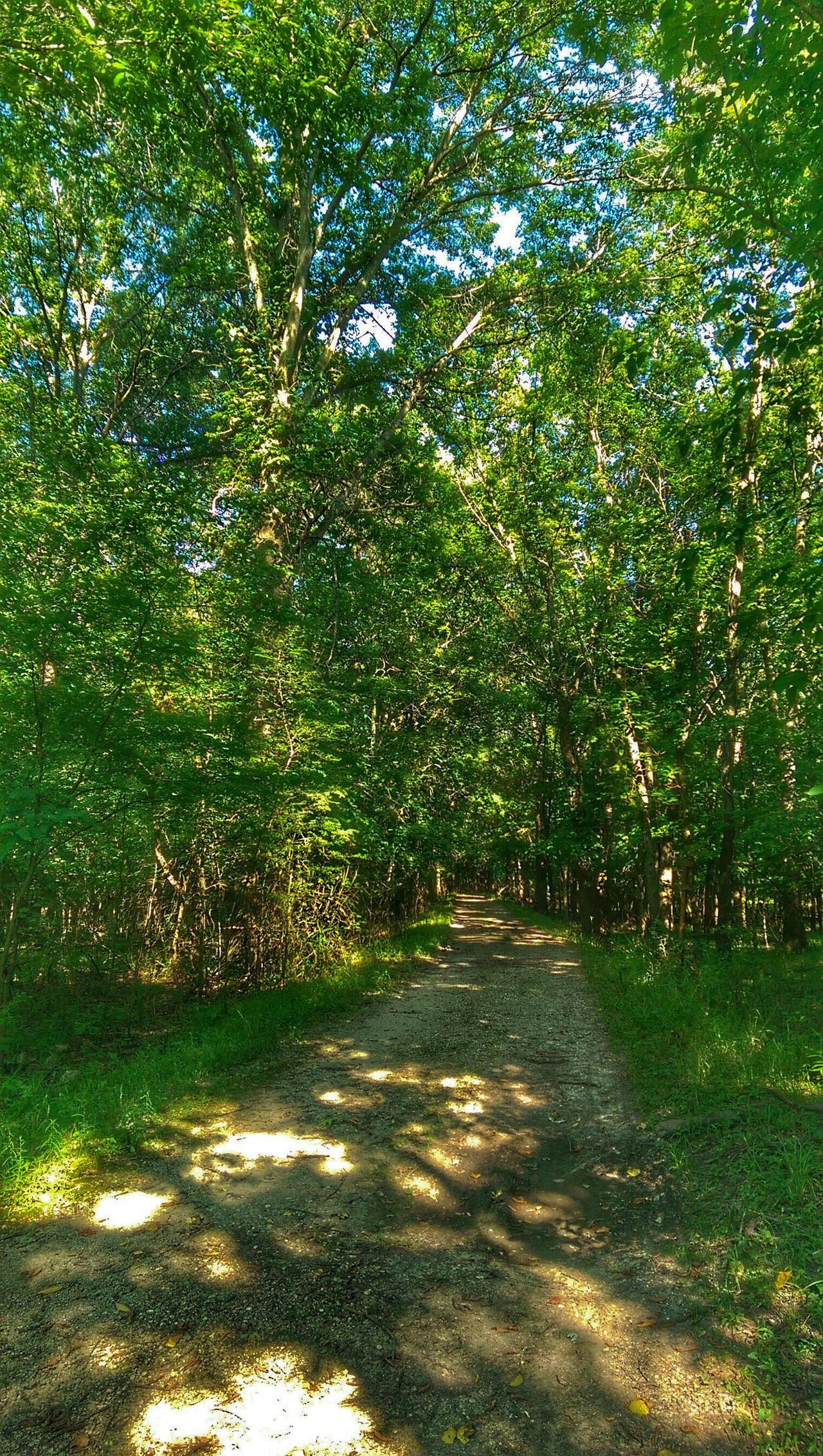 Eye Am Nature Treetasticthursday Forest Of Lost Souls Sunlight And Shadow Road To Somewhere The Great Outdoors Colour Of Life
