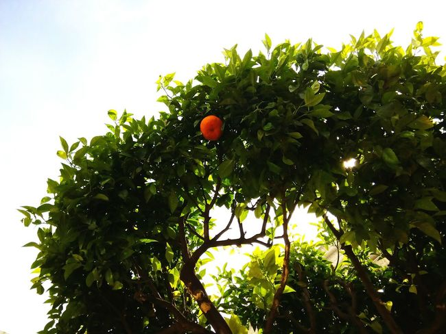 Showing Imperfection Close To Nature Taking Photos Goodthingsinlife Trees And Nature Green Enjoying Life Nice Atmosphere World Around Us Telling Stories Differently Valencia, SpainValencia, Spain Orange Fruit Up Close Street Photography
