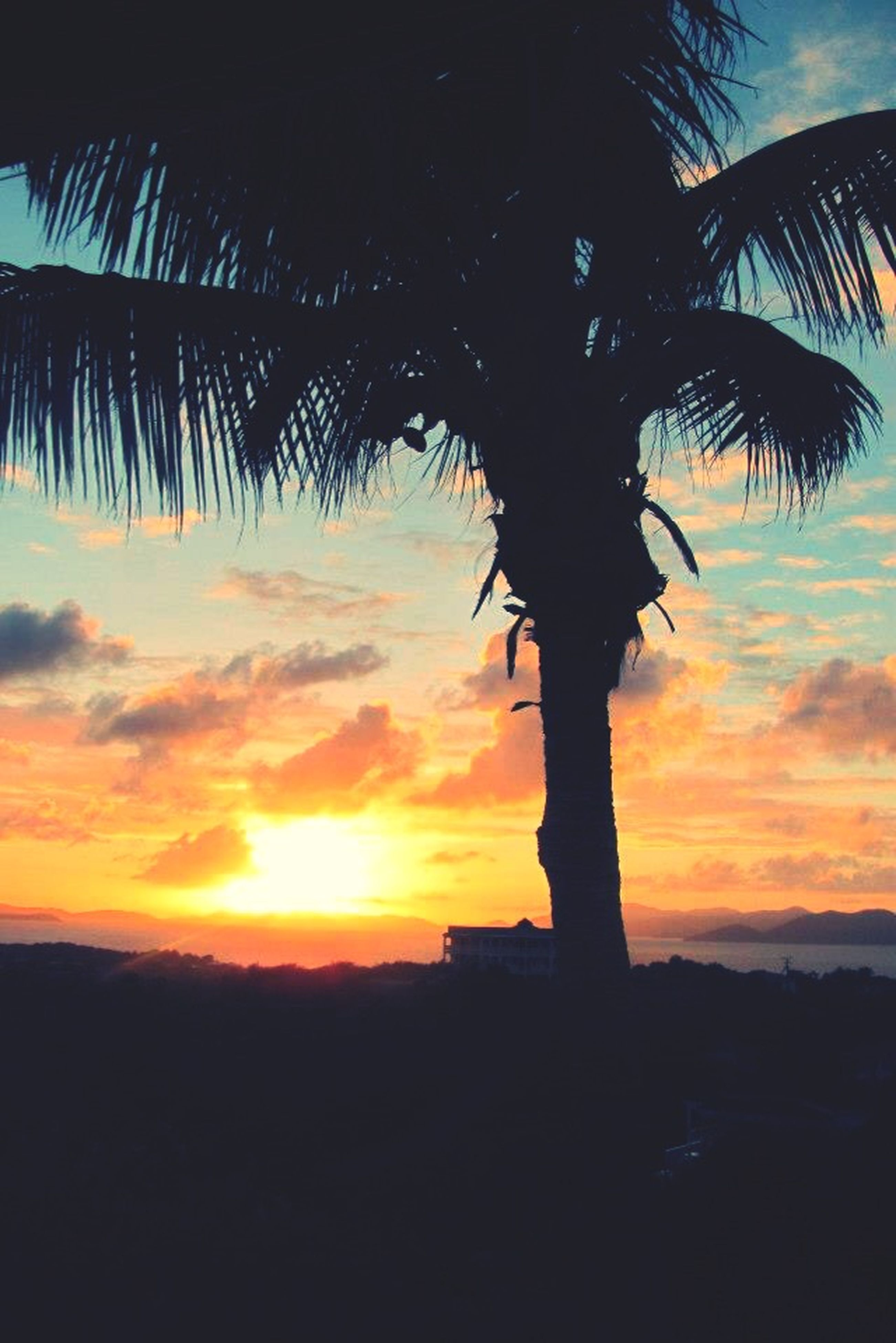 sunset, silhouette, sky, palm tree, orange color, scenics, beauty in nature, tranquility, tranquil scene, sun, cloud - sky, nature, tree, idyllic, cloud, sunlight, sea, no people, outdoors, growth