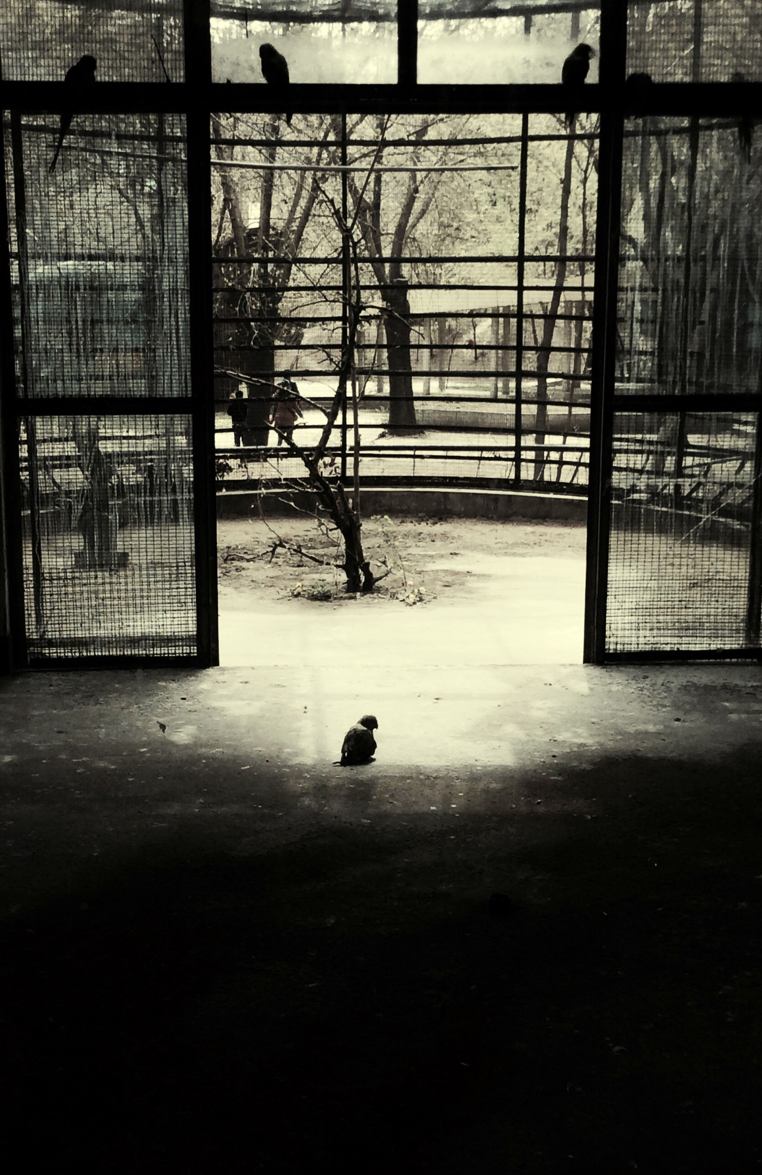 architecture, built structure, building exterior, window, building, glass - material, animal themes, indoors, house, metal, metal grate, day, no people, bird, city, protection, fence, wall - building feature, abandoned