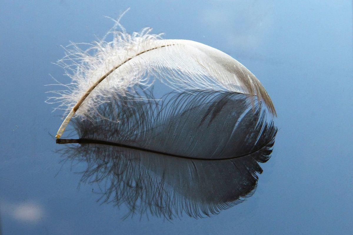 Airy Animal Themes Beauty In Nature Blue Close-up Delicate Feather  Feather_perfection Focus On Foreground Mirrored Mirrored Image Mirrored Reflection Nature No People Purity Simplicity Sky Softness Swan Texture Tranquility Weightless White Fine Art Photography Two Is Better Than One