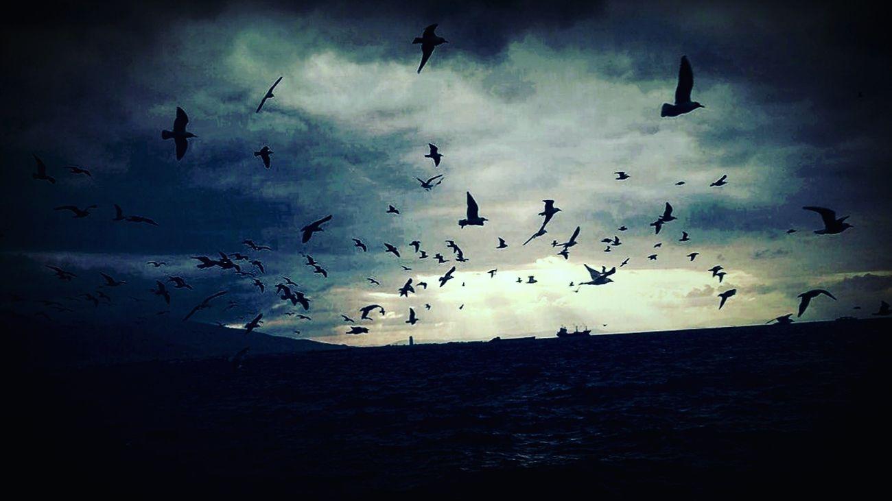 Alsancak Kordon Alsancak Black Birds Izmirkordon Izmirlife Blackheart First Eyeem Photo FirstEyeEmPic First Eyem Photo Freedom The Great Outdoors - 2017 EyeEm Awards MyPhotography