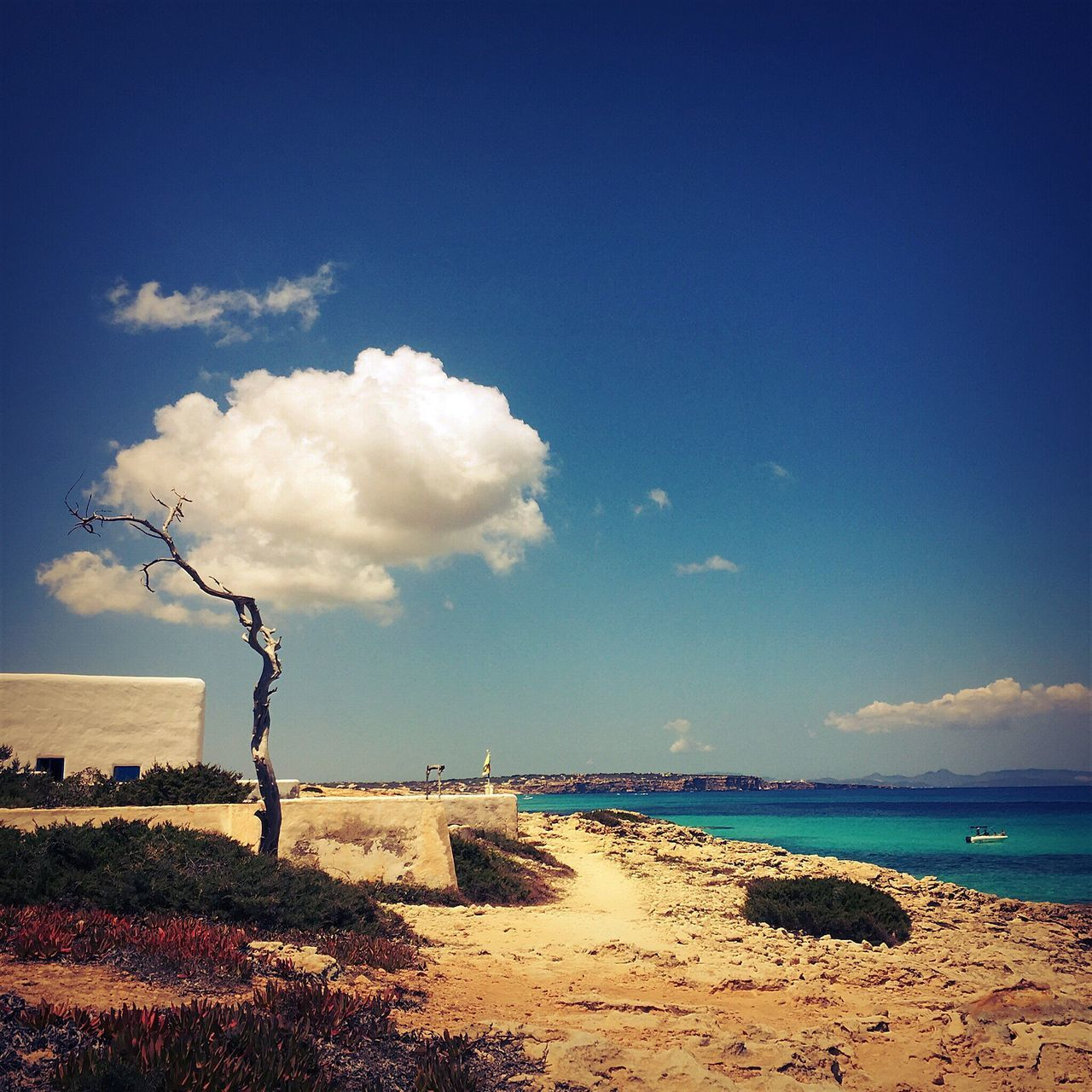 Arbol Blanco Formentera Conceptual Photography  Landscape_photography