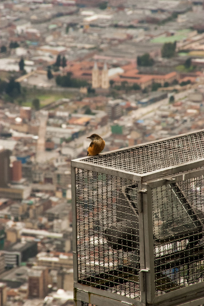 animal themes, architecture, built structure, building exterior, focus on foreground, one animal, animals in the wild, bird, day, no people, outdoors, animal wildlife, nature, city, cityscape, perching, close-up