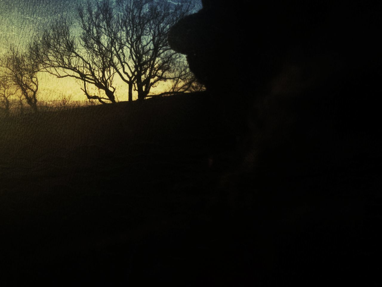 silhouette, nature, landscape, bare tree, tree, beauty in nature, scenics, outdoors, no people, sky, day, animal themes, mammal
