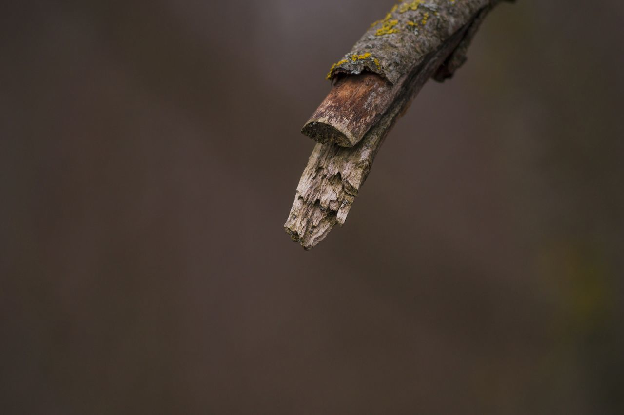 Close-Up Of Stem Against Blurred Background