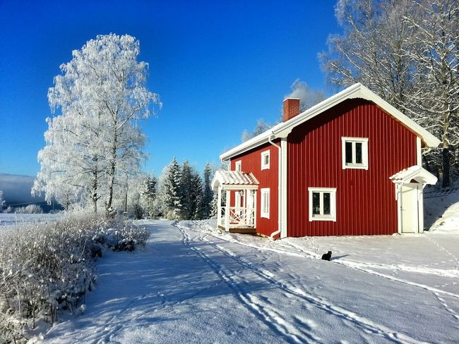 House Sweden Cat Cold Days