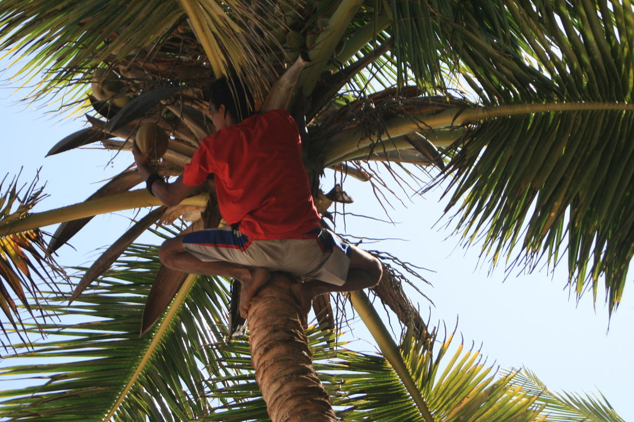 Beautiful stock photos of jagd, Climbing, Coconut, Coconut Palm Tree, Day
