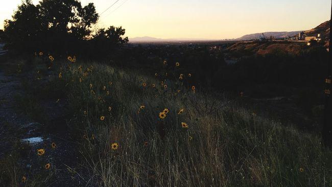 Enjoying The Sun Relaxing Utah Sunset Twilight Walking Around EyeEm Nature Lover Summertime