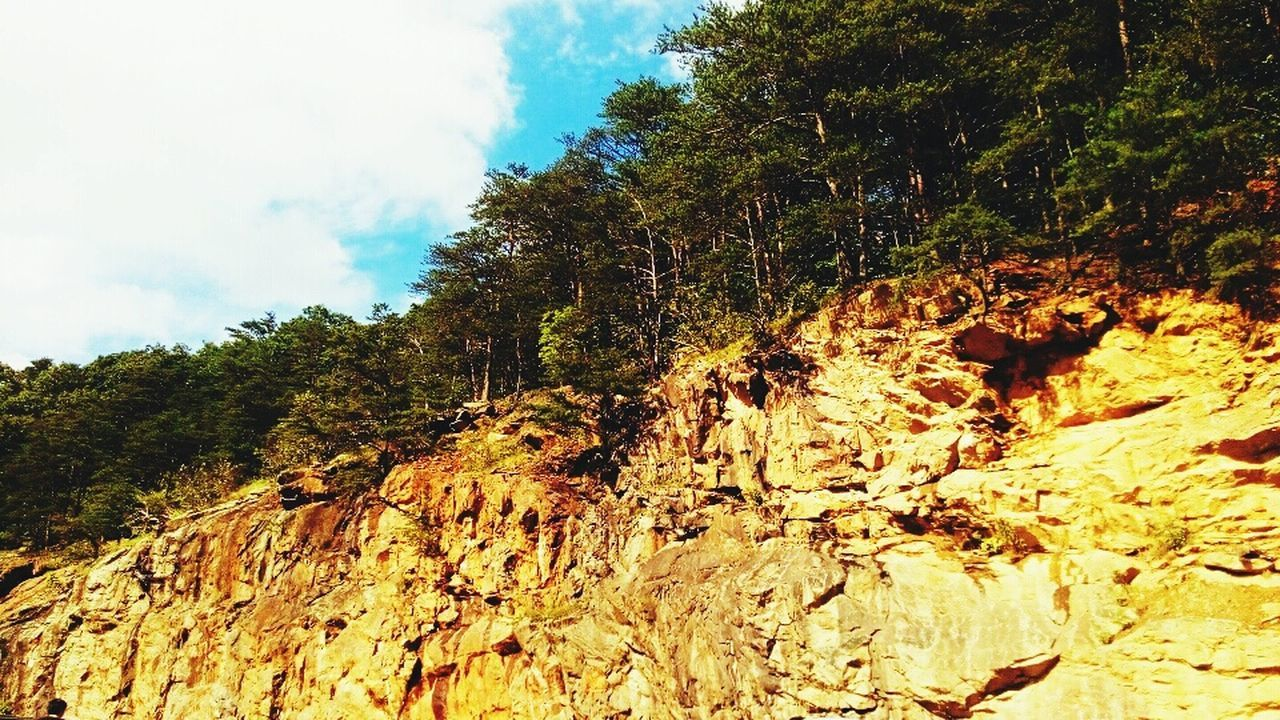 nature, tree, beauty in nature, sky, tranquility, no people, day, tranquil scene, outdoors, cloud - sky, landscape, scenics, mountain, scenery, close-up