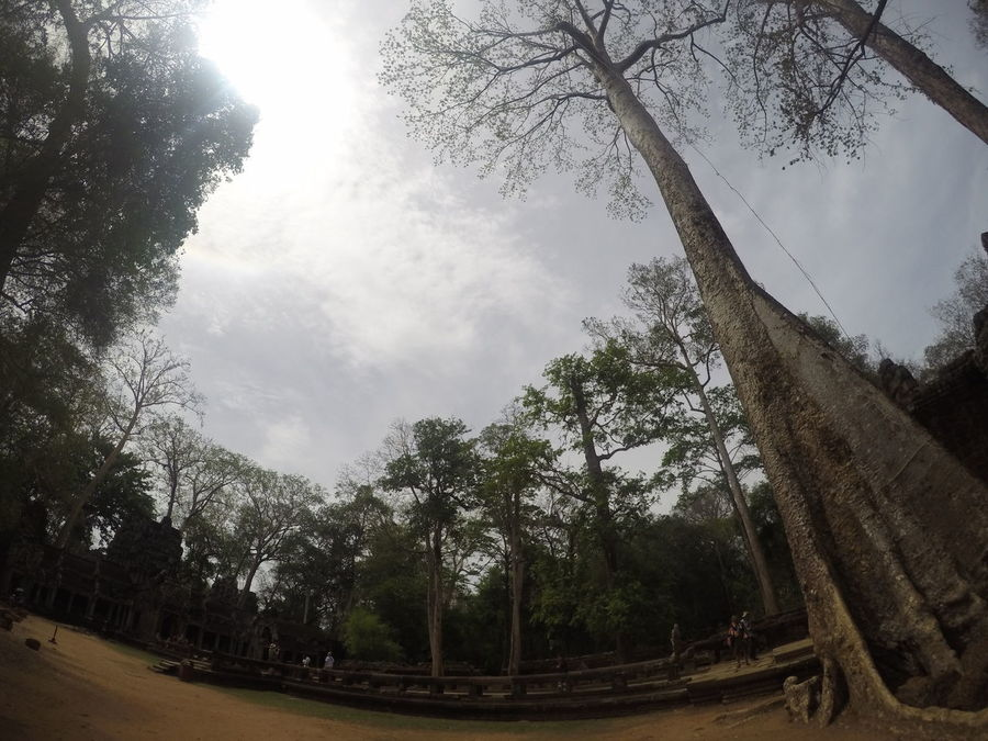 Ta Prohm Growth Nature Green Color Gopro
