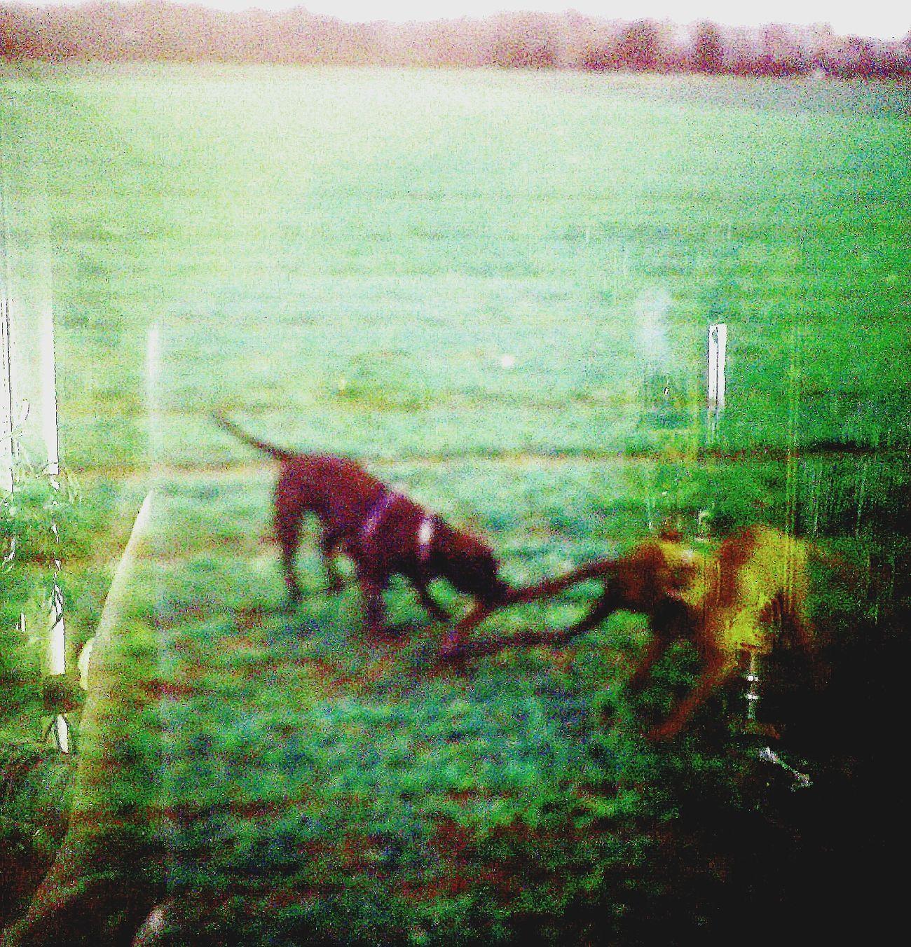Dog play Doggy Love