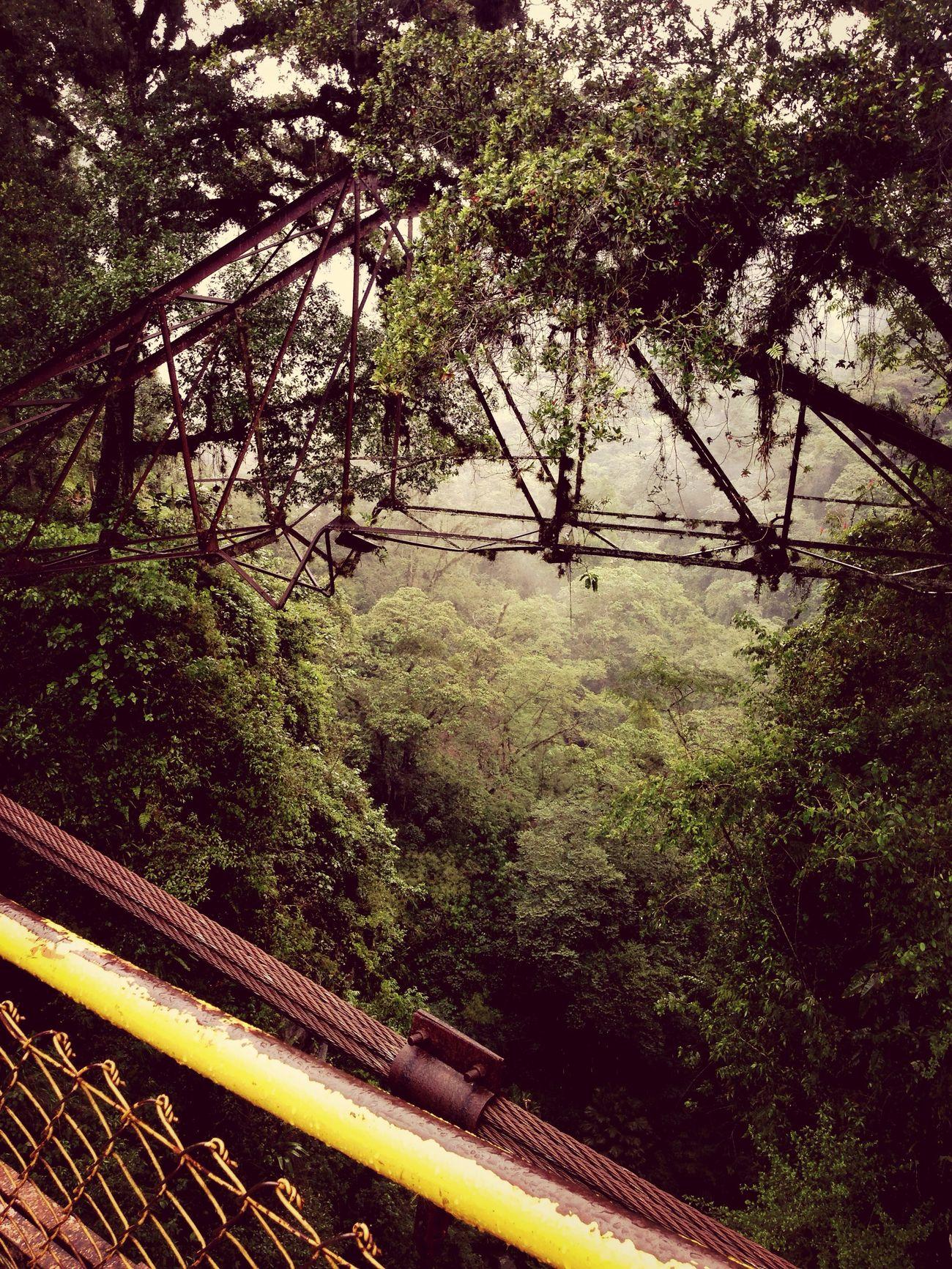 Places Nature Bridge