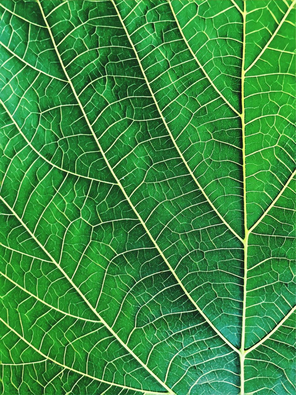 leaf, green color, backgrounds, full frame, nature, close-up, day, freshness, no people, plant, beauty in nature, outdoors