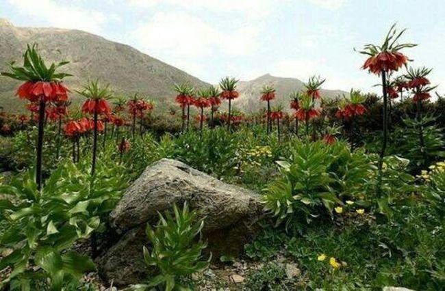 Iran♥ پهناورترین دشت الیگودرز aligodarz دشت دالانی Enjoying Life Relaxing