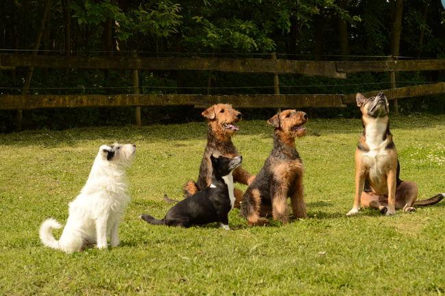 Animal Themes Diversion Dog Dog Brigades 5 Dogs Pets Sitting Togetherness