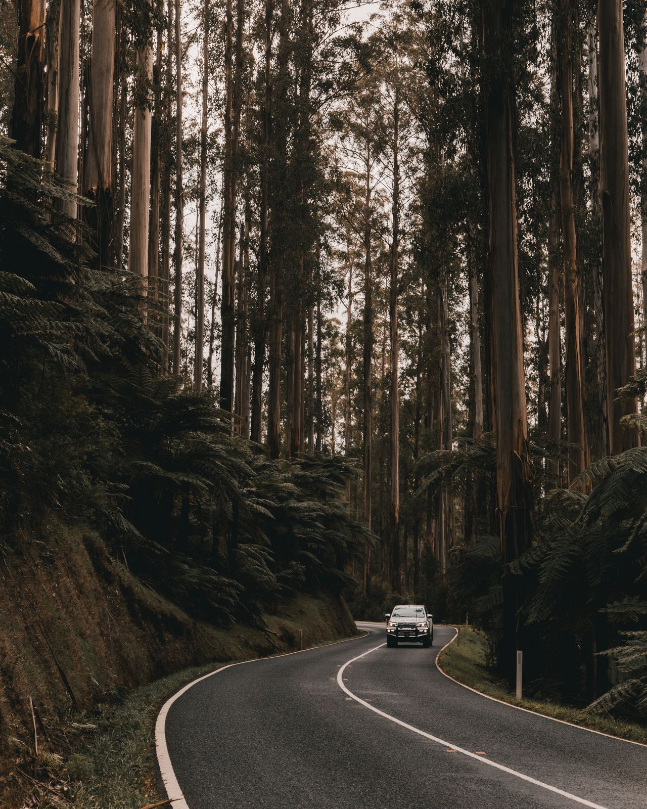 The Black Spur Car Tree Road Transportation No People Outdoors Land Vehicle Nature Beauty In Nature The Great Outdoors - 2017 EyeEm Awards Perspectives Australia Light Light Collection Black Spur The Black Spur Winding Road Forest Woods Golden Hour